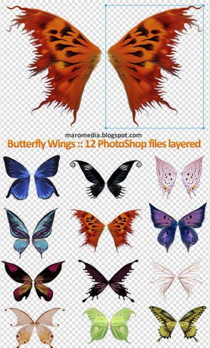 1211694513_butterflywings