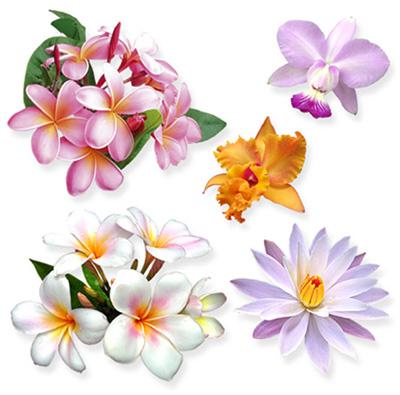1212061826_tropical-flower_demo