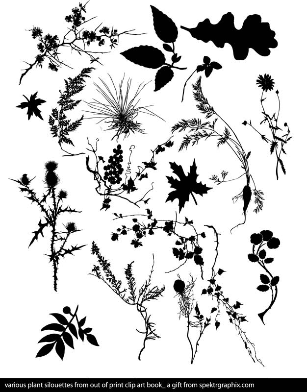 floral_vector