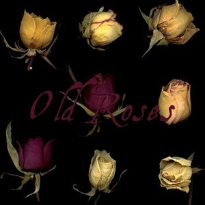old_roses_by_ShadyMedusa_stock